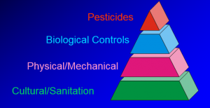 Pyramid of Pest Control Most Effective Methods